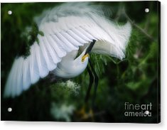 The Nature Of Beauty Acrylic Print