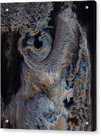 The Old Owl That Watches Acrylic Print