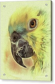 Acrylic Print featuring the photograph The Parrot Sketch by Leigh Kemp