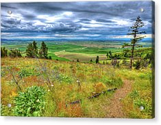 Acrylic Print featuring the photograph The Path Down Kamiak Butte by David Patterson