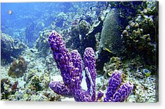 The Purple Sponge Acrylic Print