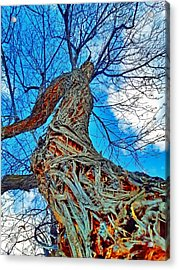 The Queen Of Pine Park Acrylic Print
