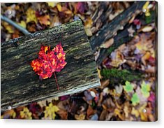 The Reason They Call It Fall Acrylic Print