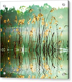 The Reed In The Evening. Tranquil Scene Acrylic Print