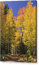 Acrylic Print featuring the photograph The Road A Little Less Traveled by Rick Furmanek