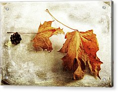 Acrylic Print featuring the photograph The Sound Of Autumn by Randi Grace Nilsberg
