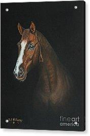 The Stallion Acrylic Print