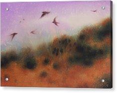 The Swallows Return  Acrylic Print by Robin Street-Morris