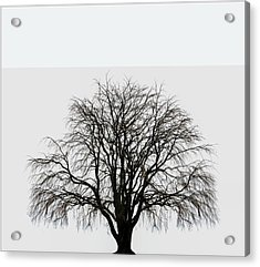 Acrylic Print featuring the photograph The Tree By The Side Of The Road by Jim Dollar