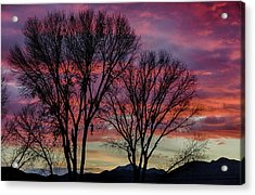 The Trees Know Sunset Acrylic Print