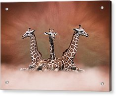 Acrylic Print featuring the digital art The Watchers - Three Giraffes by Debi Dalio