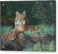 The Wild Cat  Acrylic Print
