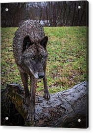 This Is My Log Acrylic Print