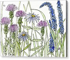 Thistle Asters Blue Flower Watercolor Wildflower Acrylic Print