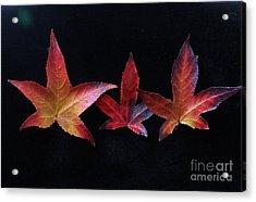 Three Amigos Or Amigas Acrylic Print