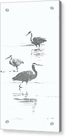 Three Blue Herons Acrylic Print