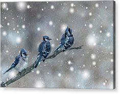 Acrylic Print featuring the photograph Three Blue Jays In The Snow by Patti Deters
