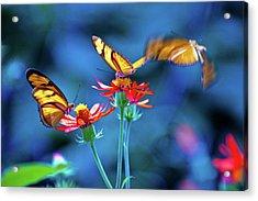 Three Butterflies Acrylic Print by By Ken Ilio