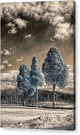 Three Kings Acrylic Print