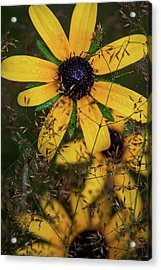 Acrylic Print featuring the photograph Through The Meadow Grasses by Dale Kincaid