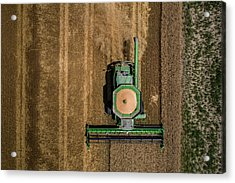 Through Wheat Acrylic Print