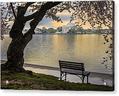 Tidal Basin With Cherry Blossoms And Acrylic Print