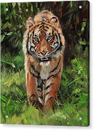 Tiger Out Of The Bush Acrylic Print