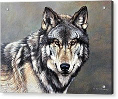 Timber Wolf By Alan M Hunt Acrylic Print