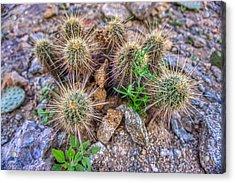 Tiny Cactus Acrylic Print
