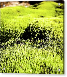 Acrylic Print featuring the photograph Tiny Forest 2 by Atousa Raissyan