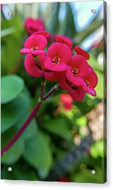 Tiny Red Flowers Acrylic Print