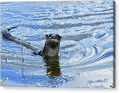 To My Otter Amazement Acrylic Print