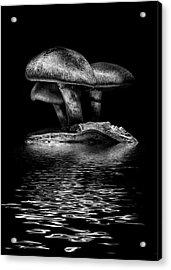 Toadstools On A Toronto Trail Reflection 3 Acrylic Print