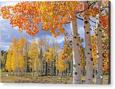 Touch Of Fall Acrylic Print
