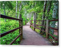 Trail At Gooseberry Falls Acrylic Print