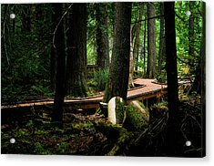 Trail Of The Ceders Acrylic Print