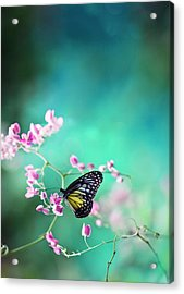 Trails Of Spring Acrylic Print by Twomeows