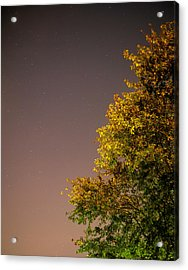 Tree And Stars Acrylic Print