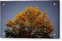 Tree And Stars Wide Acrylic Print