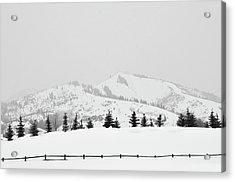 Tree Fence Acrylic Print by Dana Klein