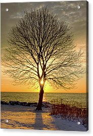 Acrylic Print featuring the photograph Tree Framed Sunrise New Hampshire by Nathan Bush