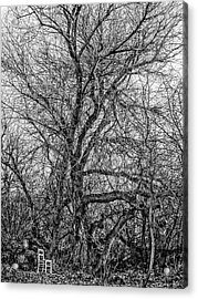 Tree In Nature Park / The Chair Project Acrylic Print