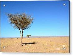 Tree In Sahara Desert In Morocco Near Acrylic Print