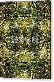 Tree No. 14 Acrylic Print
