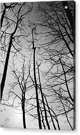 Acrylic Print featuring the photograph Tree Series 3 by Jeni Gray