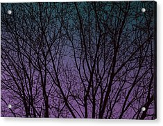 Tree Silhouette Against Blue And Purple Acrylic Print
