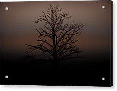 Tree Silhouette  Acrylic Print