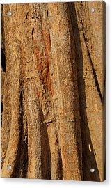 Tree Trunk And Bark Of Chambak Acrylic Print
