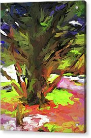 Tree With The Open Arms Acrylic Print