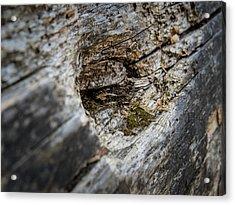 Tree Wood Acrylic Print